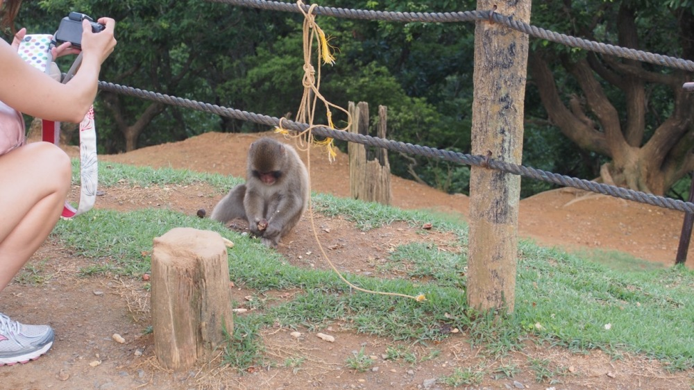 Monkey Park!